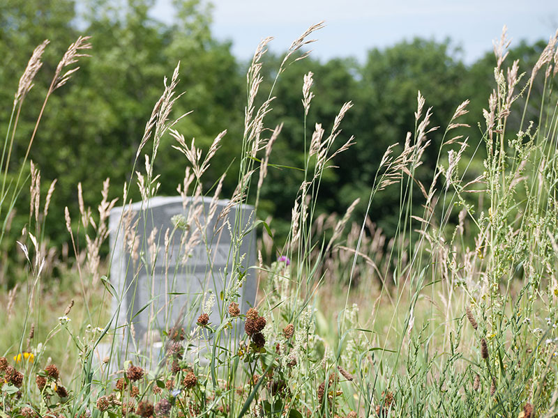 Gravestone in long grass of eco-friendly burial ground